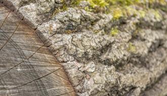<p>Detalhe de anéis de um tronco </p>